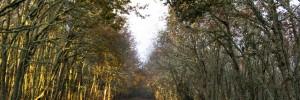 Wald und Weg